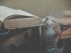 кот, книга, receiver