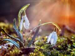 весна, дорога, karesh