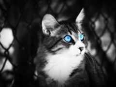 кот, white, глаз