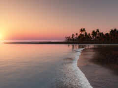 ocean, пальмы, пляж