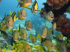 pisces, кораллы, море