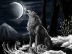 балахон, jersey, волк