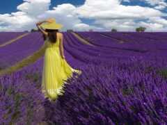 поле, lavender, девушка