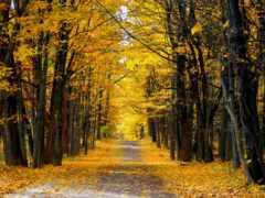 дорога, country, осень
