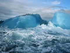 море, природа, пингвины