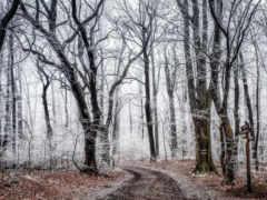 иней, осень, лес