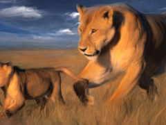 animal, природа, картинка