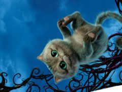 алиса, кот, wonderland