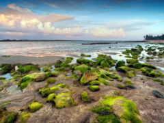 rocas, playa, musgo