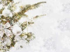 branch, есть, новый год