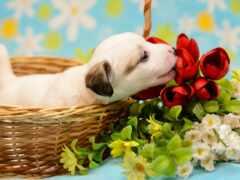 собака, world, цветы