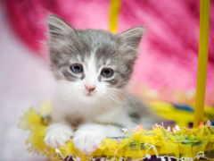 милый котенок  в корзинке