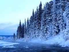 лес, мелодии, звучат