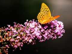 бабочка, твоя, красивый