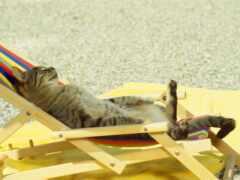 кот, загорать, пляж