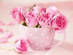 grna, цветы, rosa