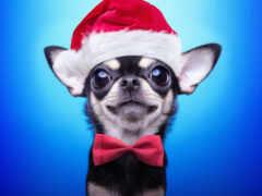 собака, christmas, шляпа