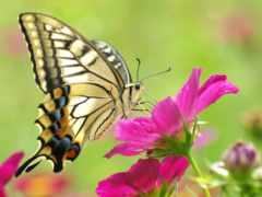 бабочка, рисунки, макро
