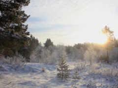trees, winter, снег