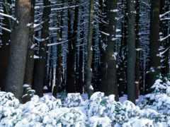 снег, лес,