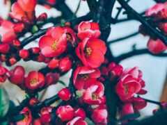 цветы, ipad, лепестки