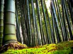 бамбук, интерьер