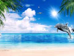 море, чайки, девушка Фон № 136273 разрешение 1680x1050