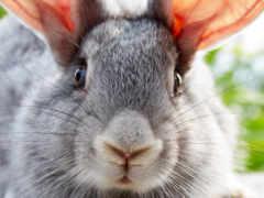 coelho, coelhos, pinterest