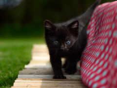 black, котенок, черная