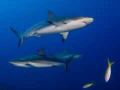 акула, getty, фото