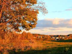 foto, höst, automne