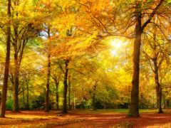 осень, лес, панорама