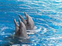 дельфина, дельфин, спать