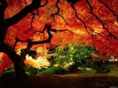 landscape, осень, природа