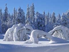 winter, лес, подарками