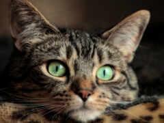 глаз, кот, зелёный