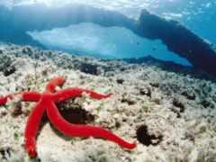 ocean, animals, fishes