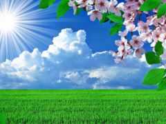 landscape, весна, trees