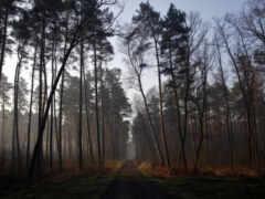 дерево, браун, лес