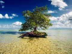 sea, tree, островок