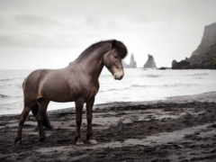 лошадь, spuni, taustapildid
