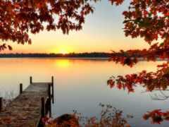 осень, лес, торрент