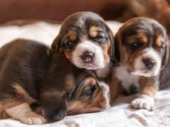 щенки, собаки, щенков