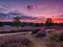 поле, закат, lavender