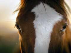 лошадь, взгляд, глаз
