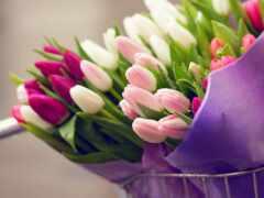 тюльпан, букет, funart