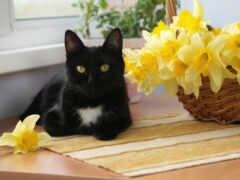 кот, цветы, white