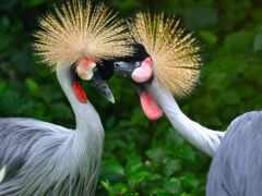 crane, птица, duvar