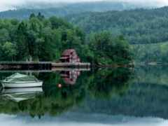 дерево, озеро, landscape