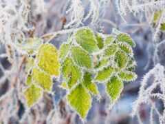 winter, дерево, pic